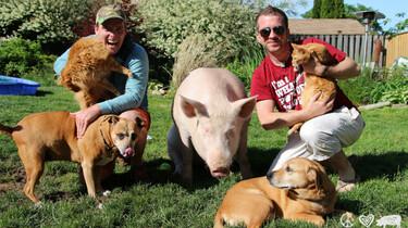 Szenenbild: Die Familie mit ihrem Schwein und Hunden im Garten