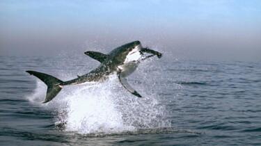 Ein Wal springt in die Luft.