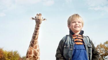 Link zu FilmTipp Mein Freund die Giraffe