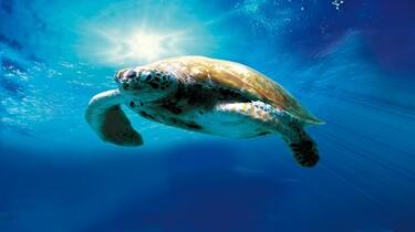 Tortuga - Die unglaubliche Reise der Meeresschildkröte, Polyband Medien