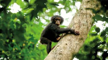 Szenenbild: Ein Affe auf einem Baum