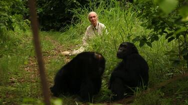 Szenenbild: Jane halb verdeckt im Gebüsch, im Vordergrund zwei Schimpansen