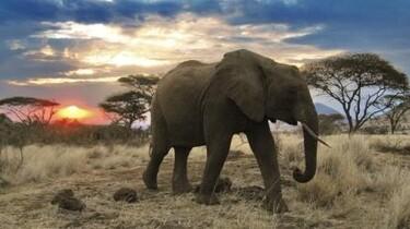 Szenenbild: Ein Elefant in der Steppe