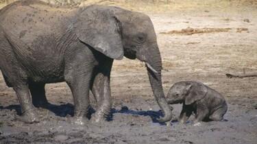 Szenenbild: Elefantenjunges mit seiner Mutter im Schlammloch