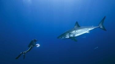 Szenenbild: Ein Taucher und Hai im Meer