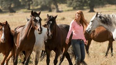 Szenenbild: Mika inmitten einer Herde Pferde